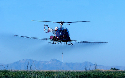 Money and support from the Utah Waterfowler's Association, Utah Legislature and the Utah Airboaters Association made the Phragmite Management project possible, including this helicopter spraying phragmites. Photo taken 9-12-08 by Phil Douglass, Utah Division of Wildlife Resources.