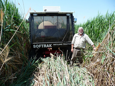 "Randy Berger, phragmites control coordinator shows how thick and ""chocked off"" the marsh can get.  ""You can't access it and neither can wildlife,"" says Val Bachman, Ogden Bay Waterfowl Management Area Manager.  UDWR photo."