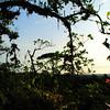 The morning's first light in the canopy of Rara Avis, Costa Rica.
