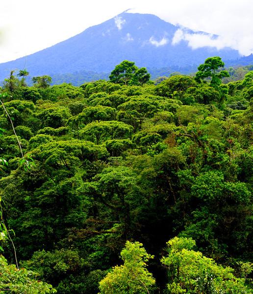 The view of dormant volcano Cacho Negro from the canopy of Rara Avis, Costa Rica.