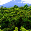 The view of dormant volcano Cacho Negro from the canopy of Rara Avis, Costa Rica.