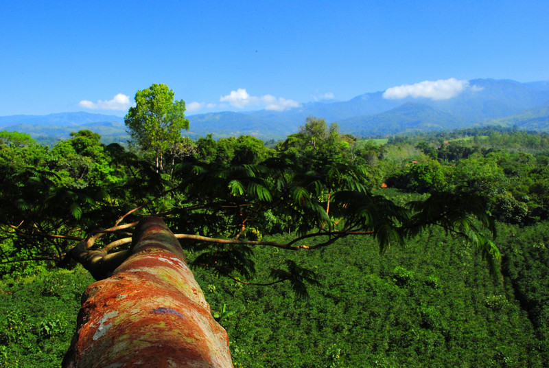 Over 33m (110ft) up in an emergent Enterolobium tree. Overlooking a sustainable coffee plantation (Finca La Escondida) and the western slopes of the Cordillera de Talamanca.