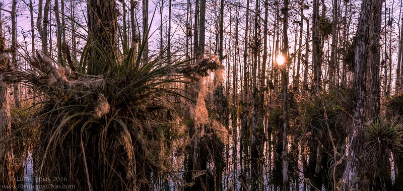 Cypress Swamp Sunset