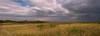 Sawgrass Marsh