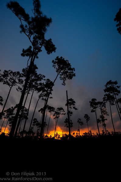 Everglades on Fire<br /> Sunset from the pine rocklands <br /> July 2013