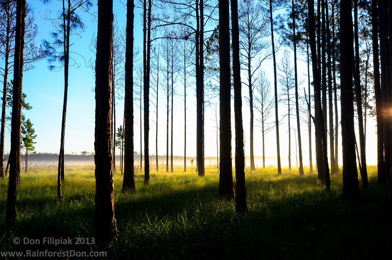 There's no way a picture could ever do justice to the beauty of a solo camping sunrise, but here's a snapshot I took while having that 1st cup of fresh coffee in Ocala National Forest.<br /> October 2013