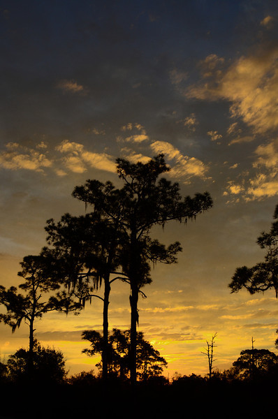 The sunrise one morning while walking to breakfast<br /> Archbold Biological Station, Florida.