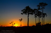 Sunset in the pinelands of the Florida Everglades