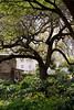 03 30 09 San Antonio & the Alamo-1026