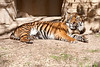 03 31 09 Waco Zoo (13)