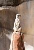 03 31 09 Waco Zoo (15)