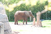 03 31 09 Waco Zoo (18)