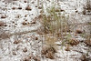02 23 10 Snow in Austin-9470
