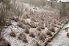 02 23 10 Snow in Austin-9459