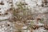 02 23 10 Snow in Austin-9469