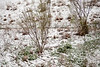 02 23 10 Snow in Austin-9475