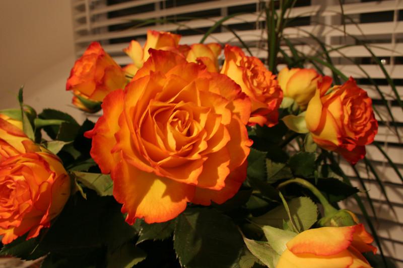 03 08 06 Faith's Birthday Flowers (11)