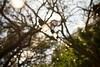 03 07 11 Faith's 6th birthday - Mayfield Park & Laguna Gloria-7579