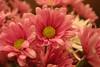 07 03 06 Flowers at Noe's House (5)