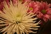 07 03 06 Flowers at Noe's House (2)