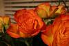 03 08 06 Faith's Birthday Flowers jpg (16)