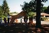 07 10 96 Brookfield Zoo (7)