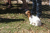 03 15 08 Easter Egg Hunt (2)