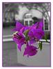 11 17 05 Portofino (49) pink b&w framed