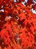 Fall leaves 03