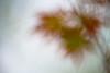 Leaves-07