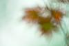 Leaves-08