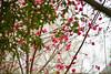 03 01 12 Spring flowers-1030