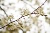 03 01 12 Spring flowers-1080