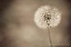 03 01 12 Spring flowers-1109
