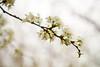 03 01 12 Spring flowers-1082