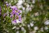 03 01 12 Spring flowers-1153