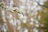 03 01 12 Spring flowers-1081