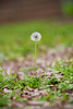 03 01 12 Spring flowers-1101