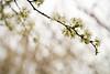 03 01 12 Spring flowers-1085