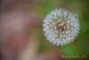 03 01 12 Spring flowers-1114