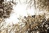 03 01 12 Spring flowers-1089