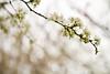 03 01 12 Spring flowers-1084