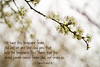 03 01 12 spring flowers-1085 2 Cor