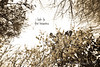 03 01 12 spring flowers-1089 heavens