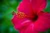 Pink flower at UT - Nov 2012-7434