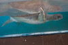 Feb 2016 Port Aransas-3081