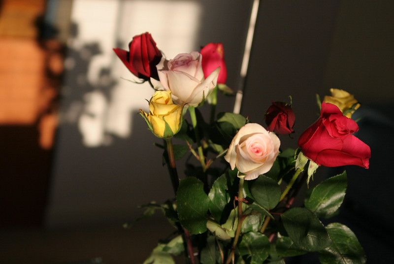 06 12 07 8th Anniversary Roses (2)