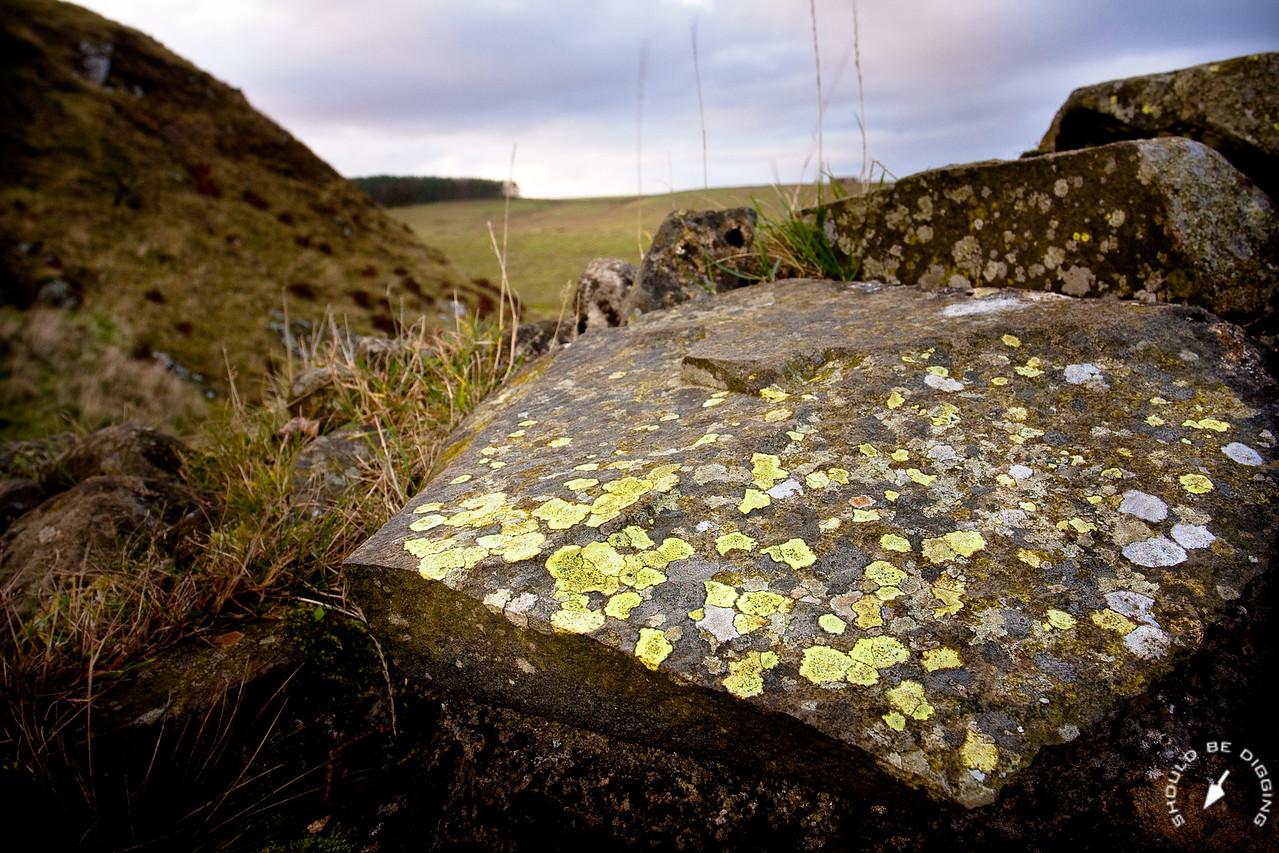 Hadrian's Wall Detail, Lichens