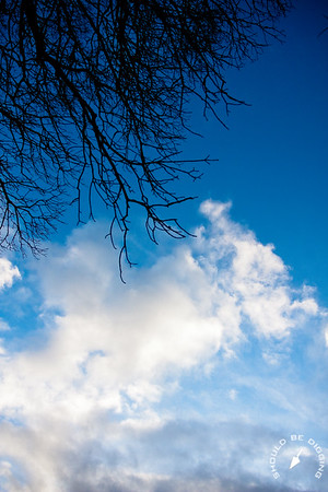 Sycamore and Sky