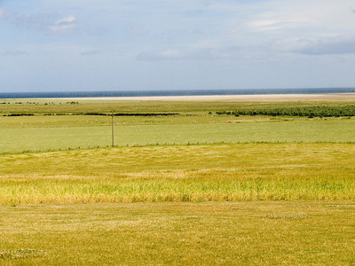 Looking across the farmland at Beale, the long grain shimmering in the wind. In the background is the North Sea
